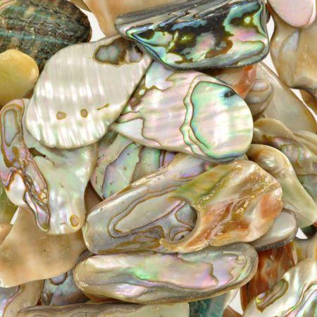 Poids du lot de nacre abalone: 250 gr. 59 pièces